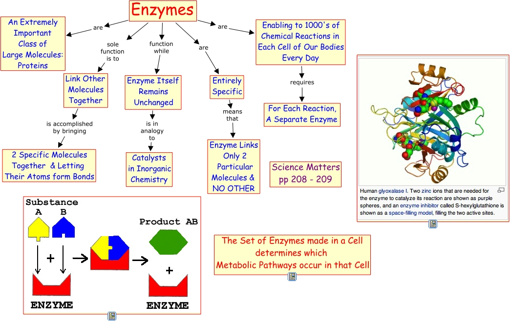 enzymes and paper Enzymes / ˈ ɛ n z aɪ m z / are macromolecular biological catalystsenzymes accelerate chemical reactionsthe molecules upon which enzymes may act are called substrates and the enzyme converts the substrates into different molecules known as products.